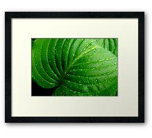 Hosta Leaf Framed Print