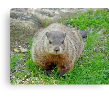 Ground hog Canvas Print