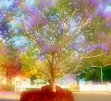 Jacaranda in my Dreams by Donuts