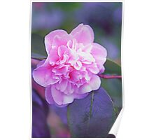 Frilly Pink Camellia Poster