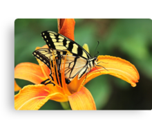 Tiger Swallowtail Butterfly On Daylily Canvas Print