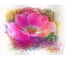 Pink wild rose flower color pencil sketch. Floral photo art. Poster