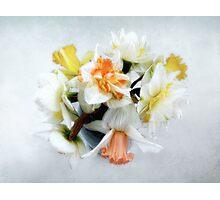 Spring Daffodils Still Life Photographic Print