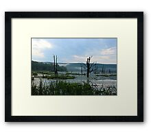 Still Swamp Framed Print