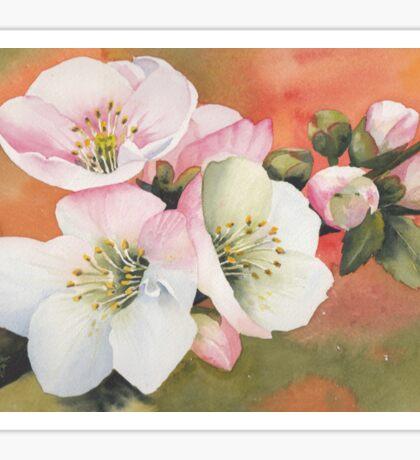 Spring Magic Sticker
