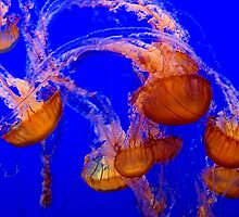 Jellies 2 by Bob Wall