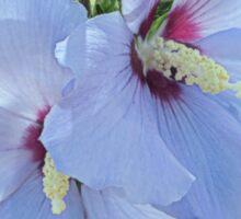 Lavender Hibiscus Sticker