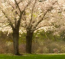 Blossom Dell_1 by sundawg7