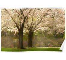 Blossom Dell_1 Poster