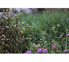 Morning Wildflowers Photographic Print