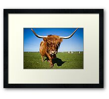 Highland Moo! Framed Print