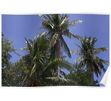 Rural Palms Poster