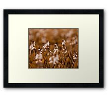 Sunrise WIlderness Framed Print