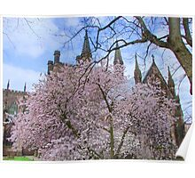 Spring Blossom in Chester Cathedral Garden, England Poster