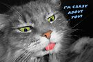 Crazy Cat Greeting Card by LouiseK