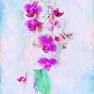 At Last Orchid Abstract by LouiseK