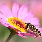 Hoverfly – Sweefvlieg by Rina Greeff