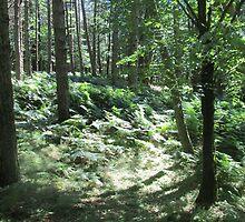 Forest 2 by Furiarossa