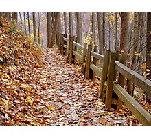 Leaf Lined Path.....  ^ Photographic Print
