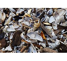 Sea Shells Sea Shells Photographic Print