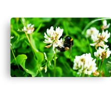 Bumblebee on Clover Canvas Print