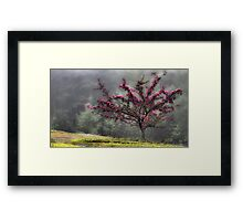 Apple Blossoms - Looking Back at the Beauty of Spring Framed Print