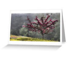 Apple Blossoms - Looking Back at the Beauty of Spring Greeting Card
