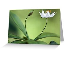 Starflower With New Bud Greeting Card