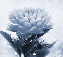 Dahlia Cyanotype by John Edwards