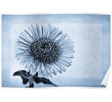 Cyanotype Aster with Textures Poster