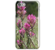 Indian Paintbrush Flower iPhone Case/Skin