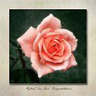 Tea Rose Congratulations by John Edwards