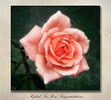 Tea Rose Congratulations by John Edwards