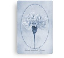Carnation Cyanotype Canvas Print