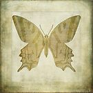 Butterfly Textures by John Edwards