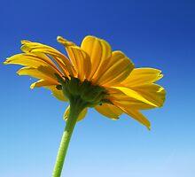 Reaching for the Sun by Janet Gosselin