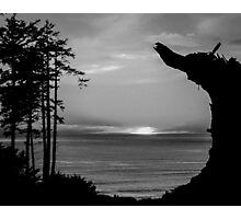 Sunset Over The Ocean And Driftwood In Black And White Photographic Print