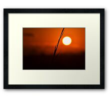 Silhouetted Blade of Grass Framed Print