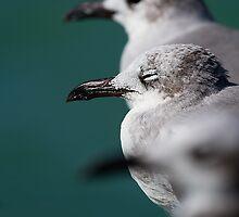 Bokehliceous Gulls Florida Keys by MrBennettKent