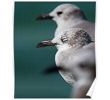 Bokehliceous Gulls Florida Keys Poster