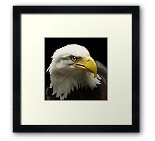 Eagle Framed Print