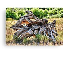 Deadwood on Cherry Creek Trail 4  Canvas Print