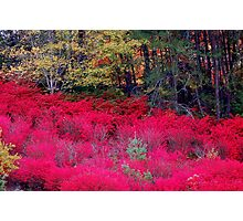 North Carolina Beauty Photographic Print