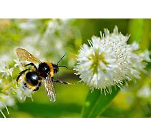 Flight Of The Bee Photographic Print