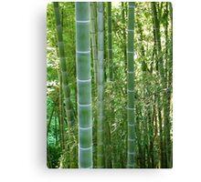 Bamboo grove, bamboo forest natural green background, Georgia, Batumi Botanical Garden Canvas Print
