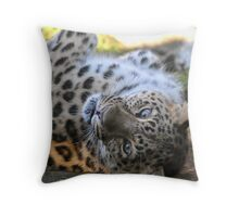 Want a Cuddle? Throw Pillow