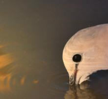 Cape Turtle Dove - African Wild Bird Background - Drinking Gold Sticker