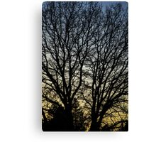 Magestic Tree Closeup Canvas Print