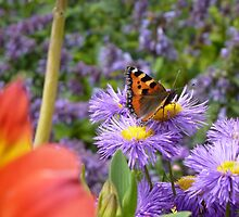 Small Tortoiseshell Butterfly Amongst the Flowers by Sue Gurney