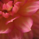 Layered petals by KMorral